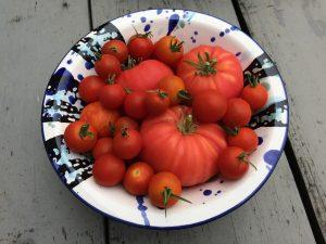 IMG 9435 300x225 - Tomaten uit eigen tuin