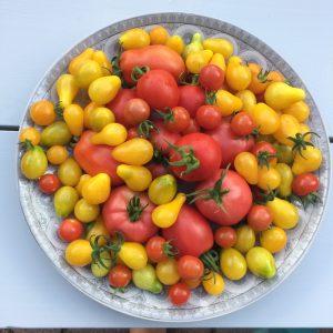 IMG 2432 e1534947808891 300x300 - tomaten uit eigen tuin